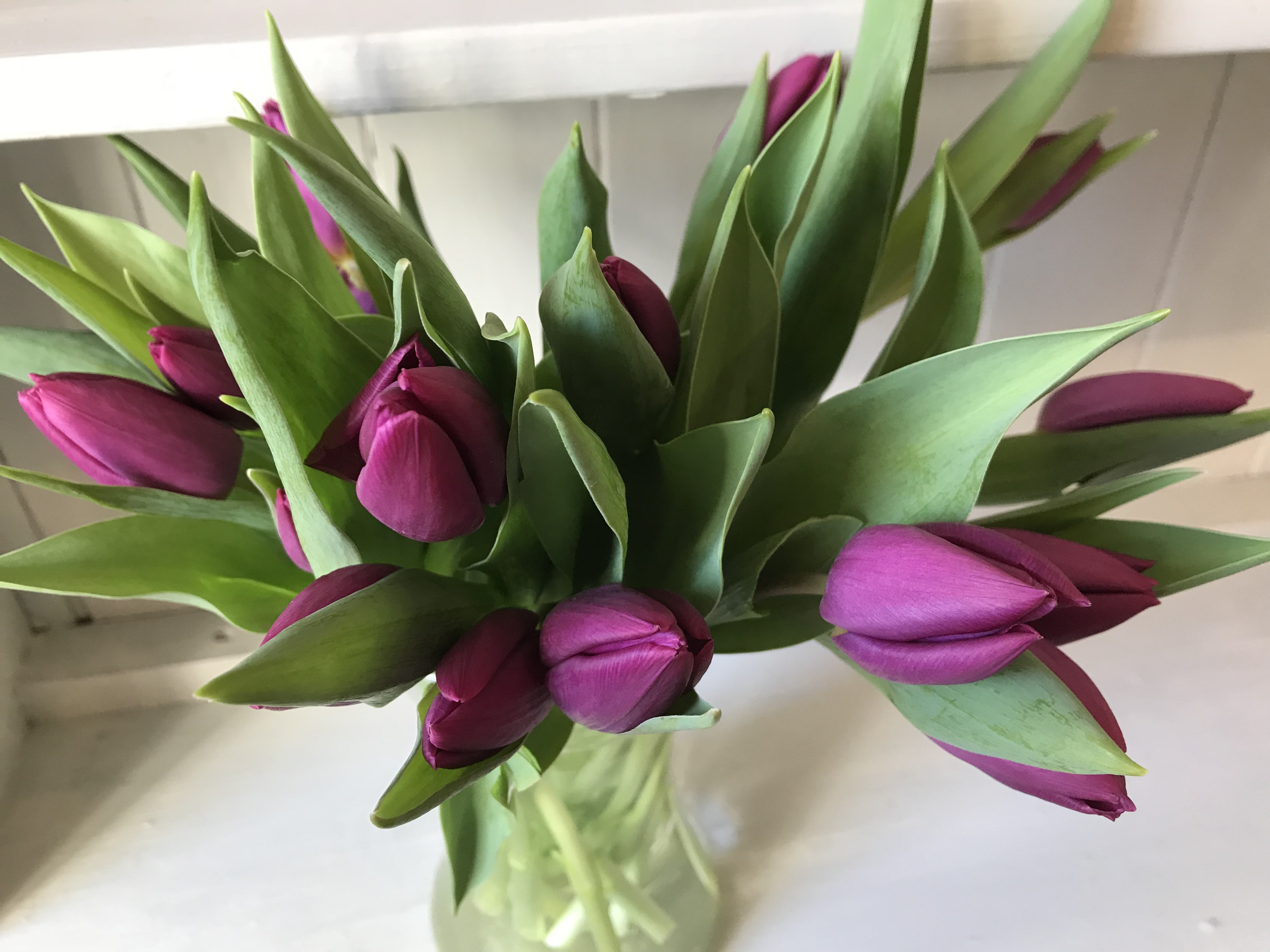 Daisylane Floral Design purple tulips